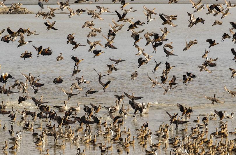 Πουλιά σε λίμνη της Ινδίας.
