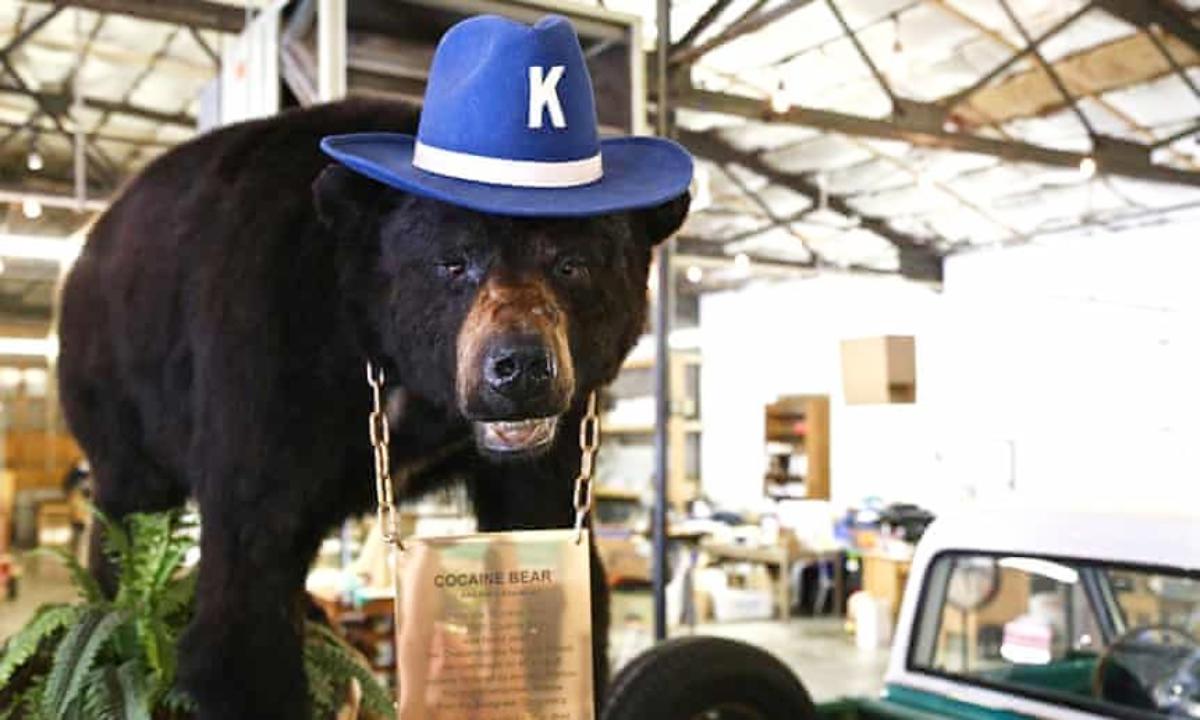 Υπόθεση Escobear: Η αληθινή ιστορία της αρκούδας που κατάπιε 30 κιλά κοκαΐνη