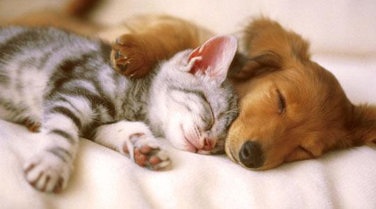 Σκύλος ή γάτα; | Oneman.gr