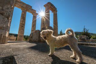 Οι αρχαίοι Έλληνες διάλεγαν με έναν πολύ περίεργο τρόπο το όνομα του σκύλου τους